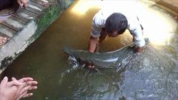 Năm người nhập viện sau khi ăn cá sấu hỏa tiễn
