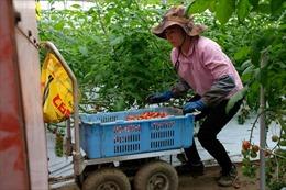 Nhật Bản công bố quy định mới về tiếp nhận lao động nước ngoài