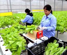 Xuất khẩu rau quả 2 tháng đầu năm giảm 9,9%
