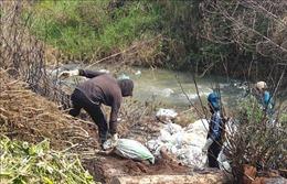 Tiêu hủy hàng chục con lợn chết bị vứt xuống suối ở Lâm Đồng