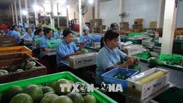 Sản xuất trái cây sạch để tăng giá trị xuất khẩu