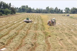 Thúc đẩy tiêu thụ lúa gạo - Bài 1: Tín hiệu khởi sắc