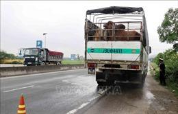 Hà Tĩnh lập chốt chống dịch tả lợn châu Phi cửa ngõ phía Bắc và Nam