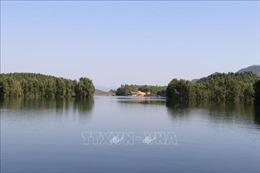 Trồng tràm Úc trên đất bán ngập cho hồ Thác Bà chưa được nhân rộng
