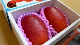 Cặp xoài Nhật Bản 'Trứng của Mặt trời' có giá khoảng 4.488 USD