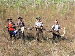 Bắt giữ con trăn khổng lồ dài 5,2m, đủ sức nuốt chửng một con hươu