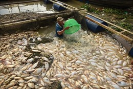 Gần 1.000 tấn cá chết trắng bè trên sông La Ngà, Đồng Nai