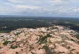 Brazil mất 953.000 ha rừng Amazon trong vòng 30 năm