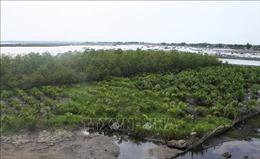 Điều chỉnh Đề án bảo vệ và phát triển rừng ven biển