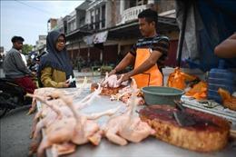 Nông dân Indonesia 'điêu đứng'vì gia cầm mất giá