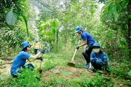 Trồng rừng tạo thêm sinh cảnh cho đàn voi tự nhiên