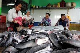 Giá cá lóc ở Trà Vinh tăng cao