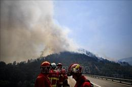 Điều hai máy bay chữa cháy hạng nặng đến dập đám cháy rừng rậm ở Bồ Đào Nha