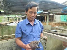 Làm giàu từ mô hình nuôi ếch kết hợp thả cá