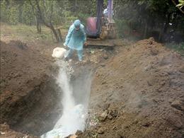 Tiêu hủy hơn 9 tấn lợn dương tính với dịch tả lợn châu Phi