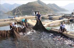 Lai Châu: Huyện Than Uyên đầu tư phát triển kinh tế vùng dân tộc thiểu số