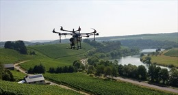 Thiết bị bay không người lái - 'trợ thủ' đắc lực trong trồng nho ở Luxembourg