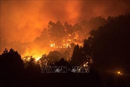 Cháy rừng ở đảo Gran Canaria của Tây Ban Nha đã giảm dần