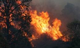 Gió to khiến cháy rừng lan rộng, vượt khỏi tầm kiểm soát