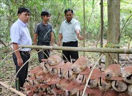 Bảo tồn nguồn gen nấm Linh chi Vườn Quốc gia Phước Bình