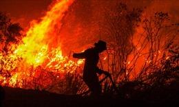 Nhiều trường học Indonesia phải đóng cửa do khói bụi từ cháy rừng