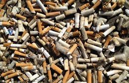 Biến rác thải thuốc lá thành công cụ bình chọn hữu ích
