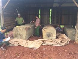 Thu giữ gần 10 mét khối gỗ được cất giấu tại rẫy hồ tiêu, cà phê