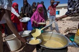 Nguy cơ khủng hoảng lương thực dù sản xuất dư thừa