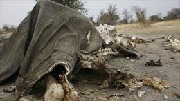 55 con voi rừng chết vì đói và khát trong vườn quốc gia của Zimbabwe