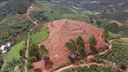 Quyết liệt trong quản lý bảo vệ rừng, không nương nhẹ, không có vùng cấm