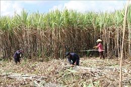 Phát triển nền nông nghiệp bền vững ở Trà Vinh: Bài 1 - Nhiều thách thức
