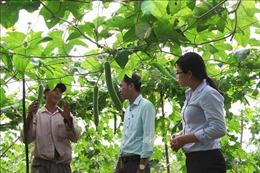 Phát triển nền nông nghiệp bền vững ở Trà Vinh - Bài 2: Tìm giải pháp hữu hiệu