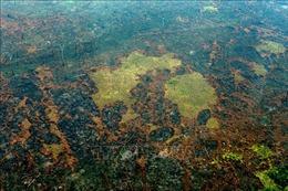 Diện tích rừng Amazon ở Brazil bị chặt phá lớn nhất trong 11 năm qua