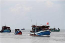 Tăng cường xử lý các vi phạm, nỗ lực gỡ 'thẻ vàng' đối với thủy sản Việt Nam
