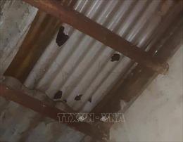 6.463 nhà dân Cao Bằng bị tốc mái, hư hại vì mưa đá đêm giao thừa
