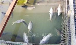 Kiến nghị thu hồi giấy phép sản xuất với các công ty xả thải ra sông Mã