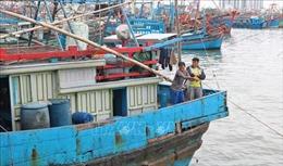 Ngư dân Khánh Hòa tấp nập vươn khơi