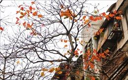 Hà Nội đẹp lạ lùng mùa cây thay lá