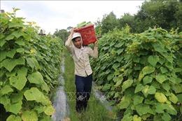 Đầu tư 18 tỷ đồng xây dựng nhiều công trình phát triển KT-XH vùng đồng bào Khmer