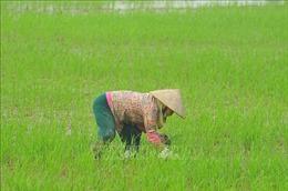 Giải pháp phòng trừ dịch hại vụ Đông Xuân các tỉnh phía Bắc