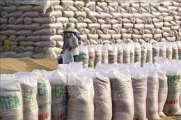 Doanh nghiệp gửi kiến nghị lên Thủ tướng về bất cập trong khai hải quan xuất khẩu gạo