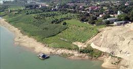 Kiểm tra, xác minh thông tin về tình trạng khai thác cát rầm rộ ở xã Thái Bình (Tuyên Quang)