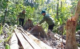 Điều tra các đối tượng ngang nhiên mở đường để phá rừng tại Phú Yên