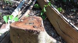 Vụ mở đường để phá rừng ở Phú Yên: Khởi tố vụ án và truy xét các đối tượng phá rừng