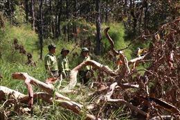 Áp lực giữ rừng ở Tây Nguyên - Bài cuối: Phát triển rừng bền vững