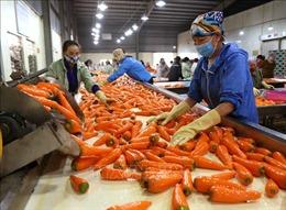 Nhiều giải pháp hỗ trợ doanh nghiệp xuất khẩu nông sản