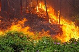 Đã kiểm soát được cháy rừng tại Nghệ An,khoảng 40ha bị thiêu rụi