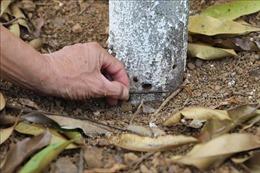 Lâm Đồng: Lại xuất hiện tình trạng vườn cây của nông dân nhiều lần bị chặt phá