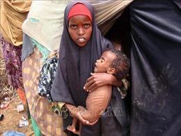 LHQ cảnh báo ít nhất 3,5 triệu người Somalia đối mặt với khủng hoảng lương thực
