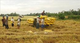 Thị trường nông sản tuần qua: Giá lúa gạo, cà phê đều tăng